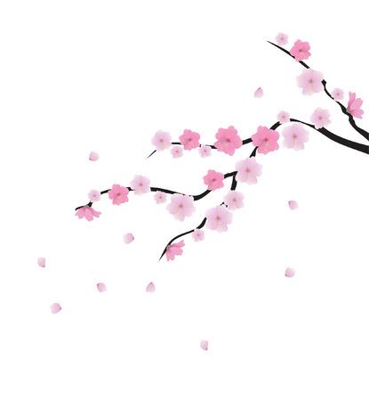 vector cherry blossom  Ilustracja