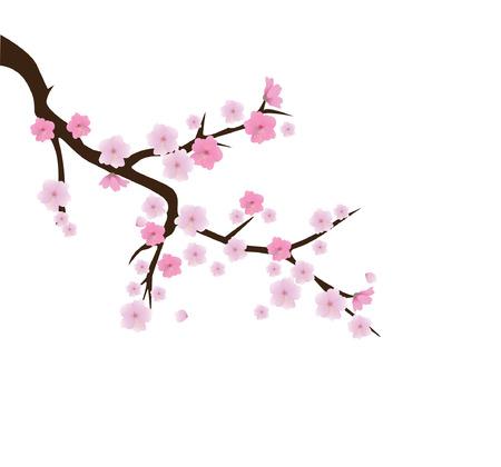 vector cherry blossom Vector