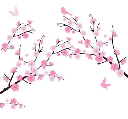 Vektor-Kirschblüte Zweige mit Vögeln