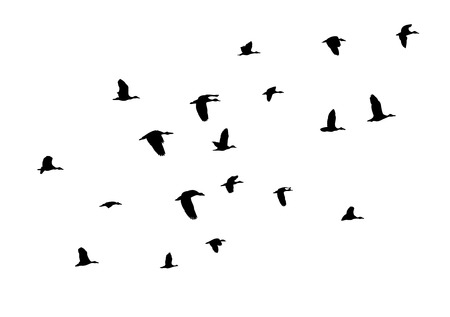 silhouettes: vector bird silhouettes Illustration