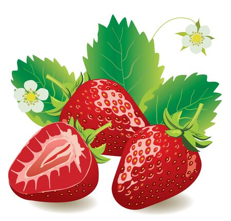 vector illustration of strawberries isolated on white background