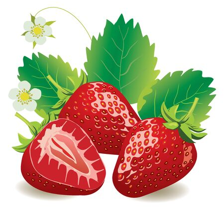 vector illustration of juicy strawberries isolated Иллюстрация