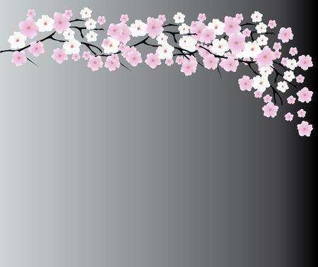fleur cerisier: illustration vectorielle de fond de fleurs de cerisier Illustration