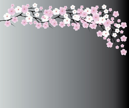 vector illustration of cherry blossom background
