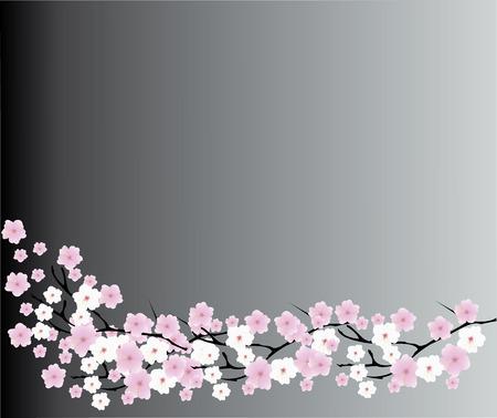 petal: vector illustration of a cherry blossom background Illustration