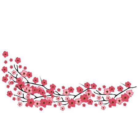 cerezos en flor: ilustración vectorial de un fondo de flor de cerezo