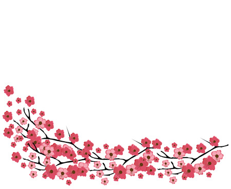 cherry blossoms: vector illustration of a cherry blossom background Illustration