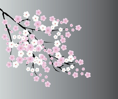 vector illustration of a cherry blossom background Illustration