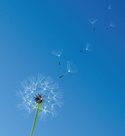 flimsy: illustration of a dandelion flower background