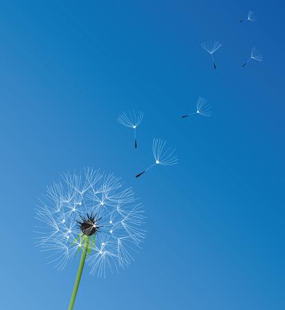 posterity: illustration of a dandelion flower background