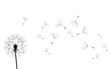 illustration of a dandelion flower background