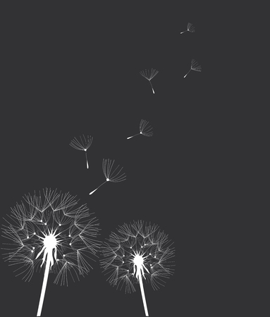 vector illustration of a dandelion flower