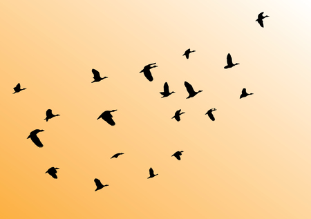 vector illustration of birds flock flying