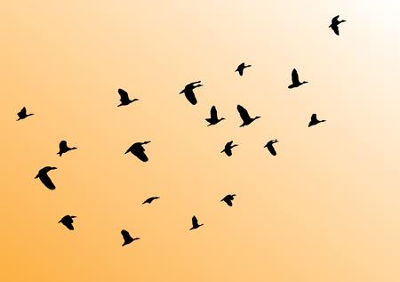 flock: vector illustration of birds flock flying