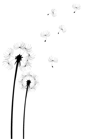 illustration of a dandelion flower silhouette