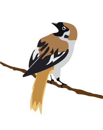 sparrow: illustration of a sparrow Illustration