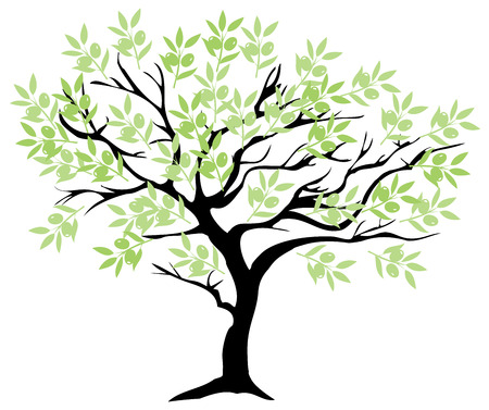 olive: vector illustration of an olive tree Illustration