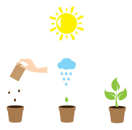 plant growth: vector illustration of a plant growth gardening concept