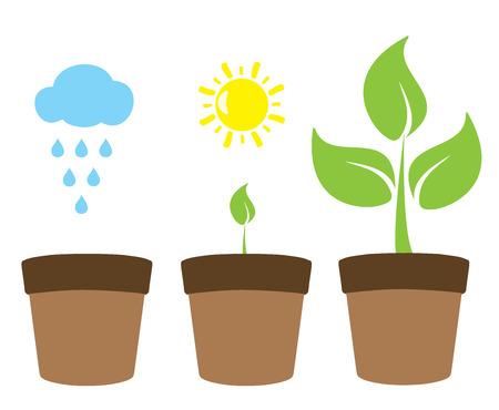 crecimiento planta: ilustración vectorial de un concepto de jardinería crecimiento de las plantas