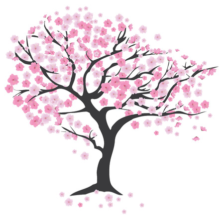illustration of cherry tree in blossom