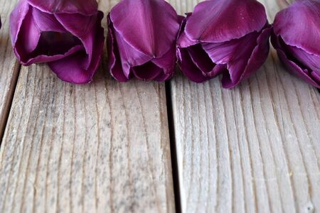 image of tulip flowers on wooden background