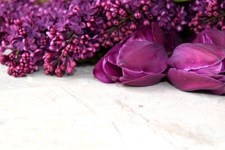 asian tulips: macro image of lilacs and tulips