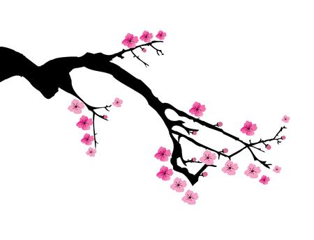 fleur cerisier: illustration vectorielle d'une branche de fleurs de cerisier