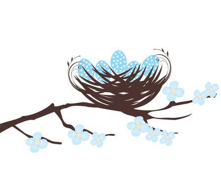 robin bird: illustration of a bird nest with eggs