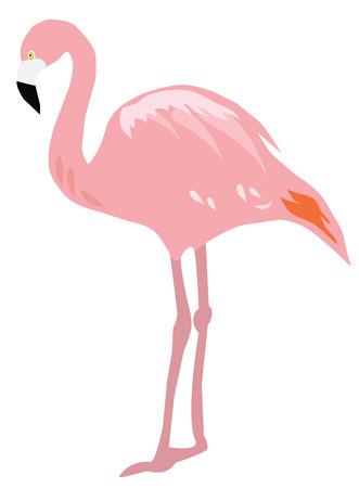 vector illustration of flamingo birds silhouettes