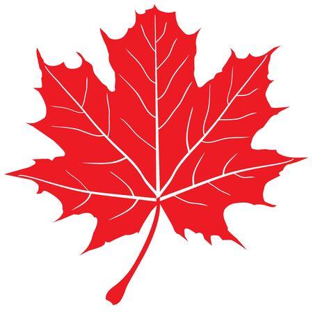 illustrazione vettoriale di foglia d'acero rosso Vettoriali