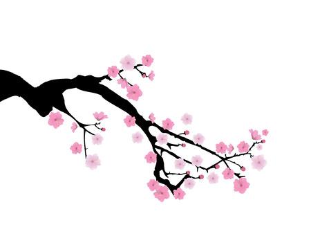cherry branch: vector illustration of cherry branch in blossom Illustration