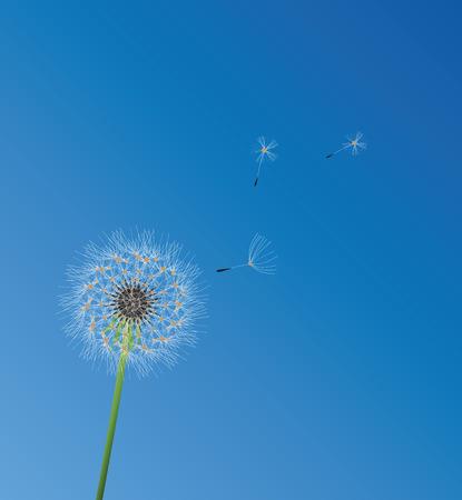 vector illustration of a dandelion flower