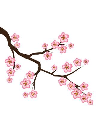 fleur cerisier: illustration vectorielle de fleurs de cerisier branche Illustration