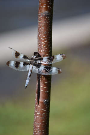 eight legs: close up of dragonfly sitting in the tree