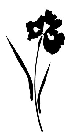 isolated flower: vector illustration of an iris flower isolated on white background