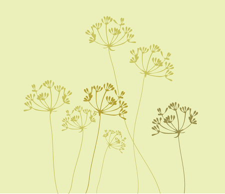 vector illustration of fennel flower background