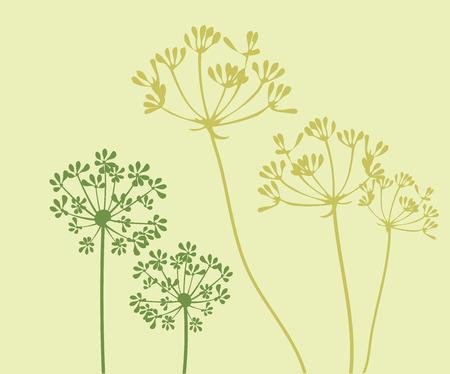 Vektor-Illustration von Fenchel Blume Hintergrund