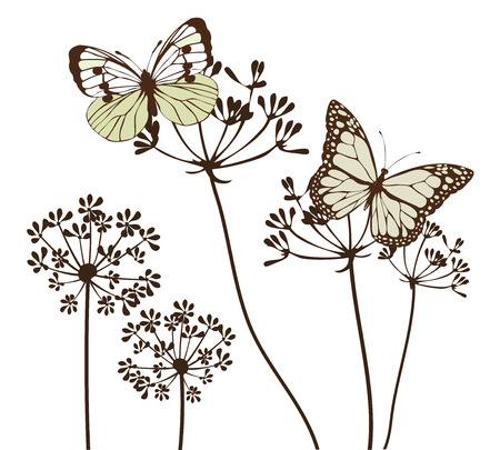 fennel: vector illustration of vintage butterflies and fennel herbs background