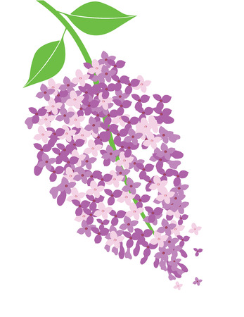 vector illustration of lilac flower