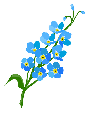 Vector illustration of a forget me not flower