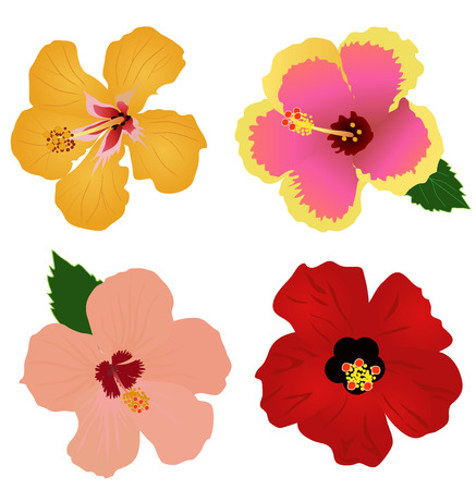 vector illustration of hibiscus flowers set of four