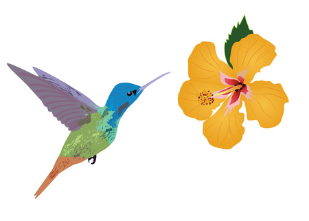 vector illustration of floral background with tropical flowers, hummingbirds