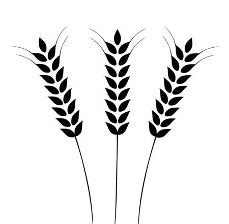 Vector illustration of Ears of Wheat, Barley or Rye. Ideal for bread packaging. Vector icon.