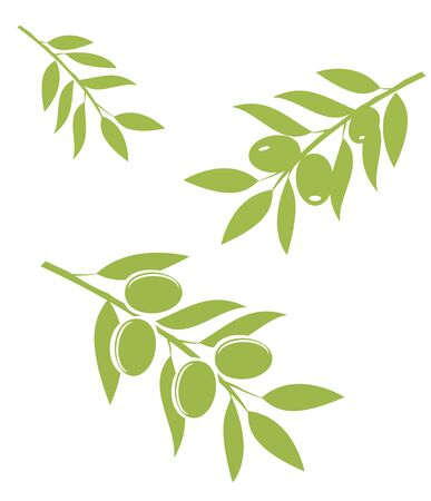 vector illustration of olive branches isolated on white background