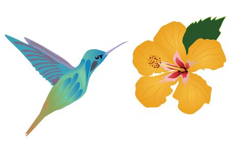vector illustration of hummingbird and flowers