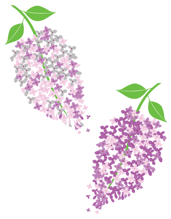 vector illustration of lilac flowers in blossom