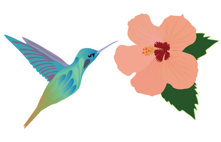 vector illustration of a hummingbird flying over tropical hibiscus flower