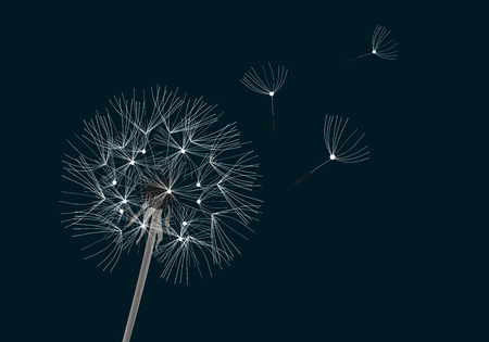 vector illustration of a dandelion flower on dark background