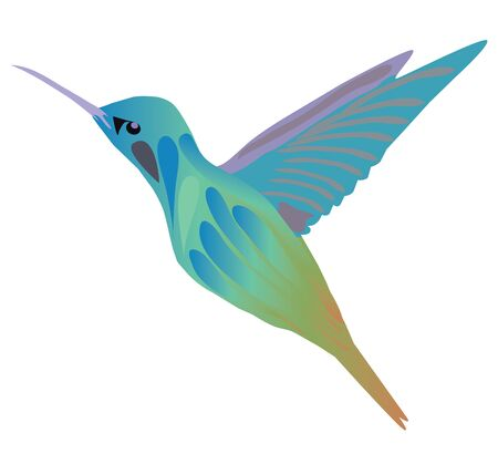 Vector illustration of a hummingbird isolated on white background. Ilustrace