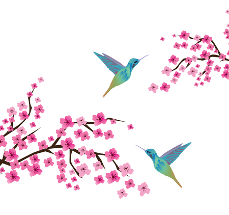 vector illustration of cherry blossom branches with hummingbirds Illustration
